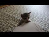 Очень забавный смешной котенок